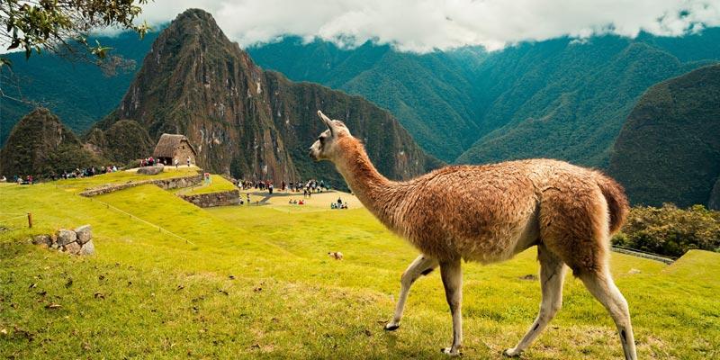 rones peruanos